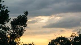 在树的剧烈的日落 免版税库存照片