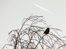 在树的剪影鸟 免版税库存照片