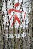 在树的北欧走的署名 免版税库存图片