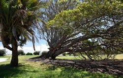 在树的原史旗子标志 免版税库存照片