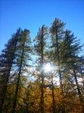 在树的反射 库存图片