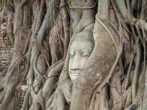 在树的古老菩萨雕象根源在Mahatat寺庙 免版税库存图片