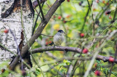 在树的可爱的小的鸟在春天 免版税库存照片