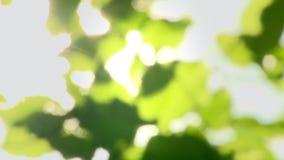 在树的叶子与通过发光的太阳 股票录像