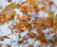 在树的叶子本质上在秋天 图库摄影