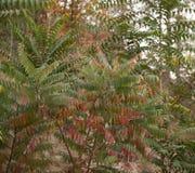 在树的叶子本质上在秋天 库存图片