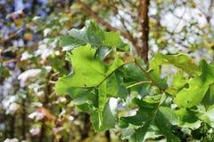 在树的叶子的绿叶素 免版税库存图片