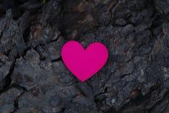 在树的吠声安置的心脏标志 免版税库存照片
