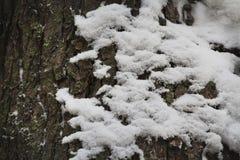 在树的吠声的雪 免版税库存照片