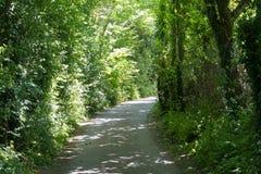 在树的国家步行 免版税库存图片