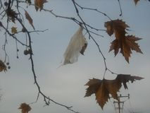 在树的塑料袋 免版税库存照片