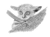 在树的塞内加尔丛猴 免版税图库摄影