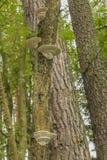 在树的多孔属在轻的森林里 免版税库存图片