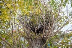 在树的大巢 库存照片