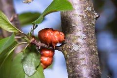 在树的大,非常明亮的毛虫 库存图片