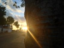 在树的太阳光芒 免版税库存照片