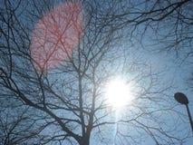 在树的太阳 免版税库存图片