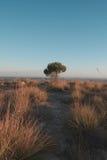 在树的孑然 免版税图库摄影