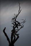 在树的孔雀 免版税库存照片