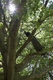在树的孔雀 免版税库存图片