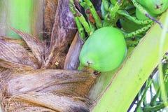 在树的小椰子在与浅景深的庭院精选的焦点 免版税库存图片