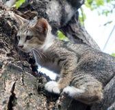 在树的小的逗人喜爱的小猫 库存照片