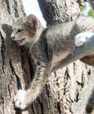 在树的小的逗人喜爱的小猫 库存图片