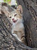 在树的小的逗人喜爱的小猫 免版税图库摄影