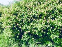 在树的小花 免版税库存图片