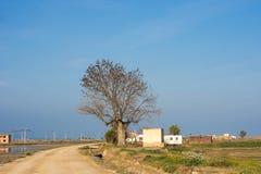 在树的很多鸟 域偏僻的结构树 背景蓝天 复制空间 免版税库存照片
