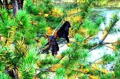 在树的手套吊 库存照片