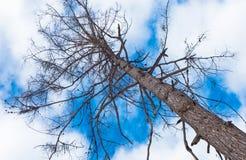 在树的抽象看法 库存图片