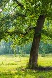 在树的摇摆 免版税库存图片
