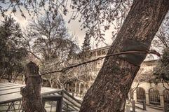 在树的支持导线 免版税库存照片