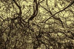 在树的支持导线 库存照片