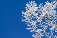 在树的斯诺伊冰在有蓝天的冬天妙境 免版税库存照片