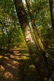 在树的旅游标志在森林道路,绿草,树附近 免版税库存照片