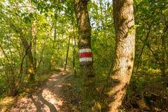 在树的旅游标志在森林道路,绿草,树附近 免版税库存图片