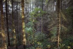 在树的日落 免版税库存图片