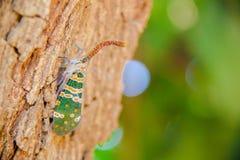 在树的昆虫 免版税库存图片