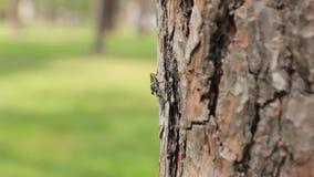 在树的昆虫 股票录像