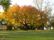 在树的明亮的橙色秋天叶子 库存照片