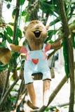 在树的木流动逗人喜爱的儿童玩偶吊 免版税库存图片