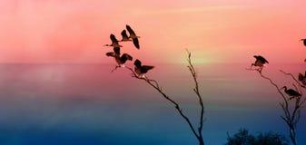 在树的朱鹭 库存图片