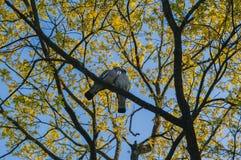 在树的柔软 库存图片