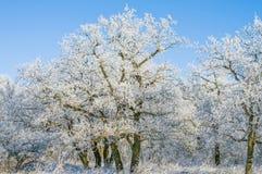 在树的树冰在森林在冬天 免版税库存图片