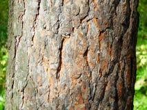 在树的树干的吠声 免版税库存照片