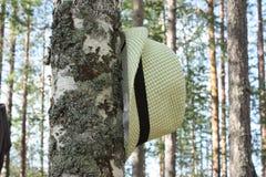在树的树干的帽子 免版税库存图片