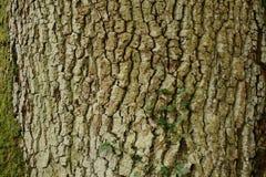 在树的样式 免版税库存图片