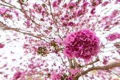 在树的桃红色喇叭花 免版税库存照片